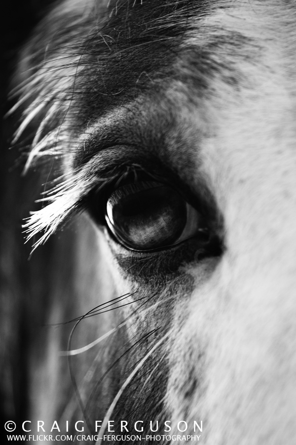 animal, black, eye, horse, photography, sad, white