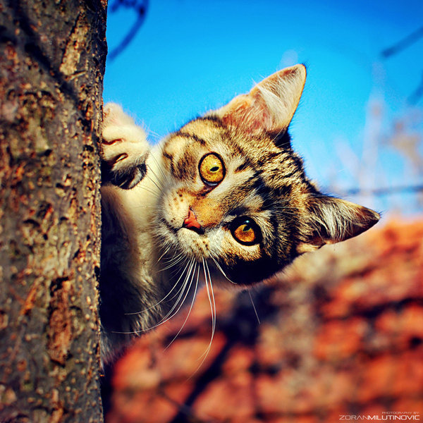 animal, cat, cool, cute, eyes
