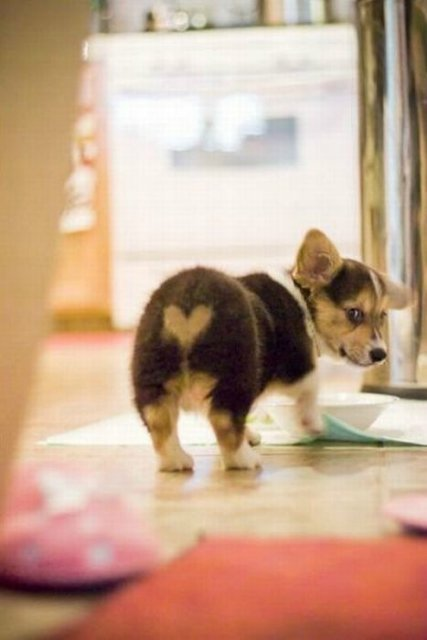 animal, cute, dog, heart