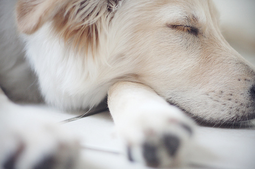 animal, cute, dogs, photography, sleep