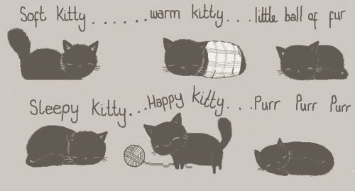 animal, cute, kitty, text, the big bang theory