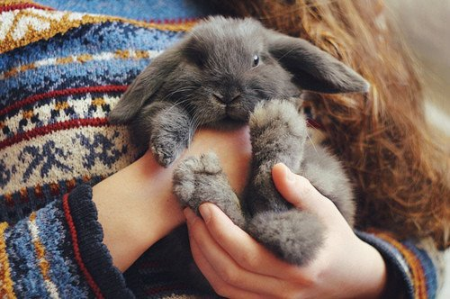 animal, cute, love, nice, pretty, puppy, rabbit