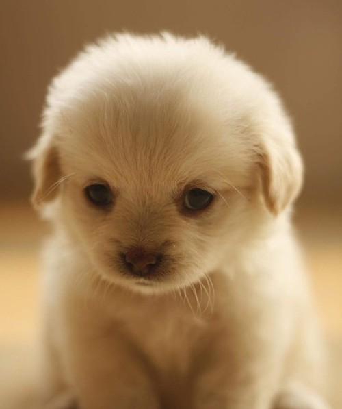 animal, cute, love, puppy