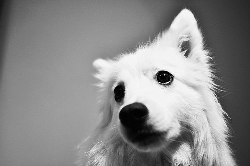 animals, black and white, cute, dog