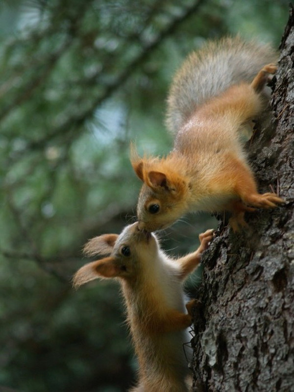 animals, cute, kiss, love, squirrel