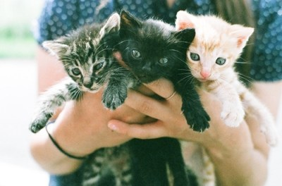 animals, cute, kittens