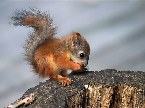 animals, cute, squirrel, sweet