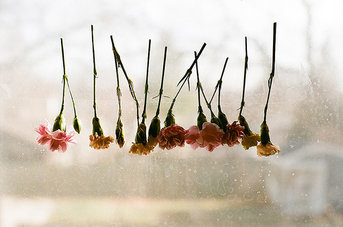 art, beautiful, floral, flower, flowers, ophidiophobic, rain, roses, window