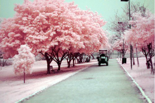 asma, car, cool, couleurs, love, man, pink, romantic, street, tree