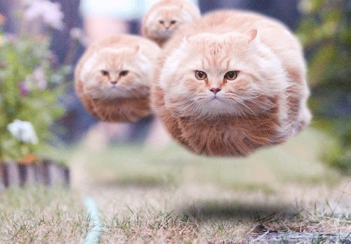 attack, cats, cute, evil, floating