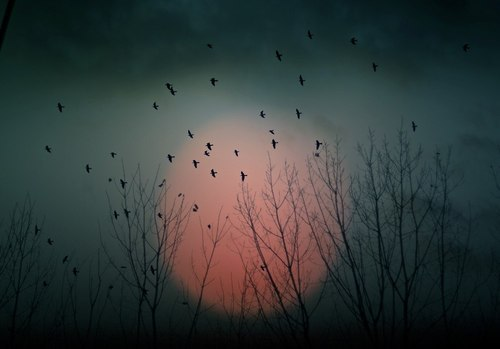 awesome, birds, dark, photography, startling
