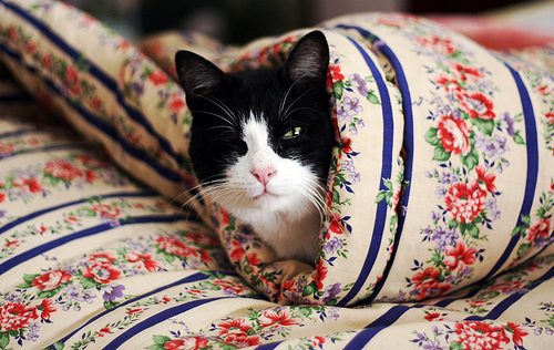 awesome, cat, cute, floral, photography