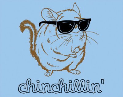 awesome, chillen, chinchila, cute, funny, happy, simple, sunglasses