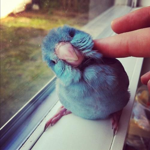 awn, bird, blue, color, cute