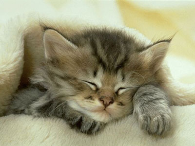 aww, cat, cute, kitten