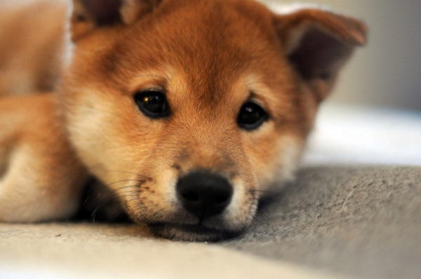 aww, cute, dog, photography, puppy