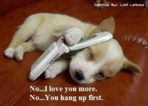 aww, cute, phone, puppy
