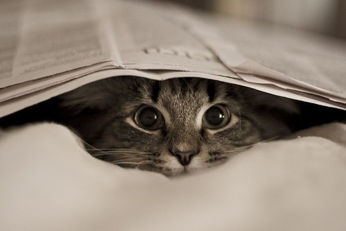 baby, beautiful, black and white, cat, cute, kitten, kitty, newspaper