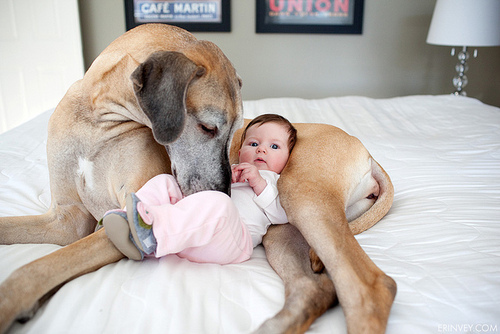baby, child, cute, dog, kid