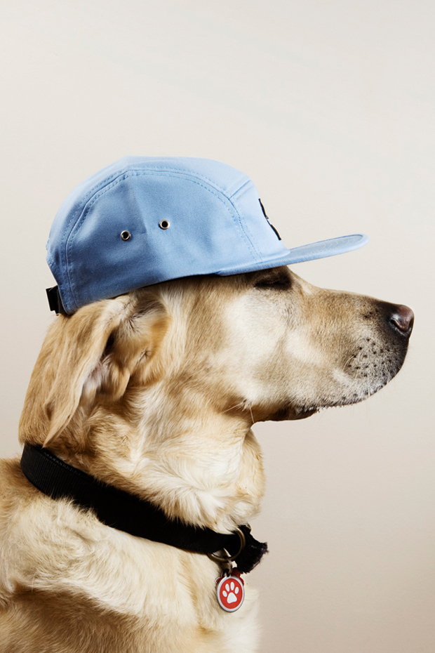 bad, cool, cute, dog, hat