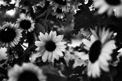 IMAGE | backgrounds for tumblr black and white