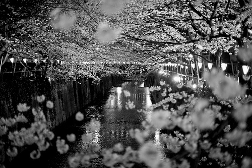 b&w, beautiful, black & white, black and white, cute, flower, flowers, landscape, light, lights, nature, photo, photography, water