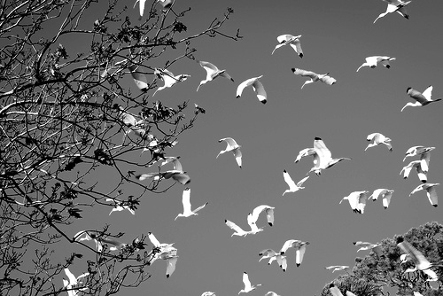b&w, bird, birds, black & white, black and white, free, landscape, nature, photo, photography, place, sky