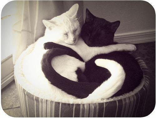 basket, black, cats, cute, heart