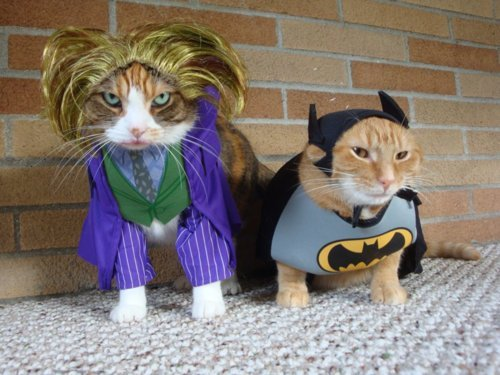 batman, cat, cute, funny, the joker