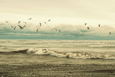 beach, beautiful, birds, cool, nature, photo, sky, winter, photography, wonderfull