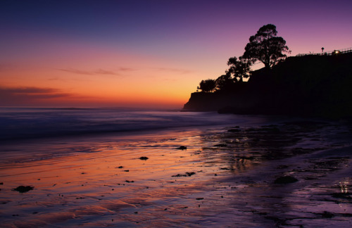 beach, cloud, clouds, dark, landscape, night, ocean, photography, pink, purple, sand, sea, sky, tree, trees, view, water