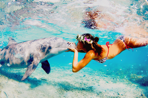 beach, dolphin, girl, kiss, summer