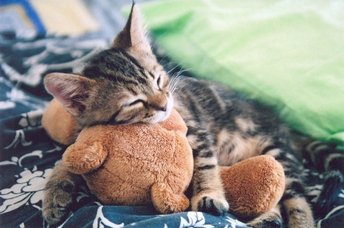 bear, beautiful, cat, cuddle, cute, hug, kawaii, kitten, kittens, kitty, love, lovely, sleeping, together