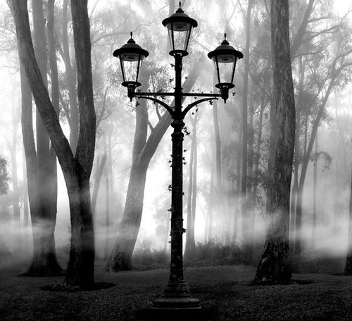 beautiful, black and white, fog, lamp, trees