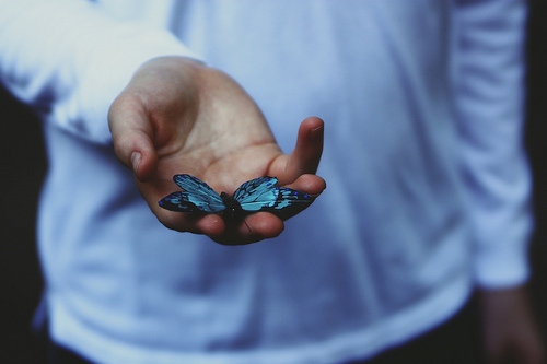 beautiful, blue, boy, butterfly, cute, hand, nature, photography