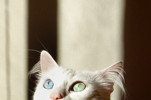 beautiful, cat, eyes, indie, photography