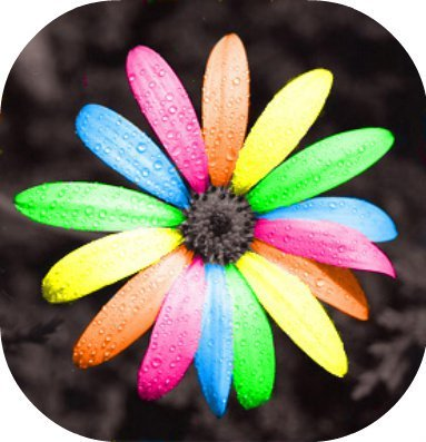beautiful, colorful, colors, cute, flower, plant, rainbow