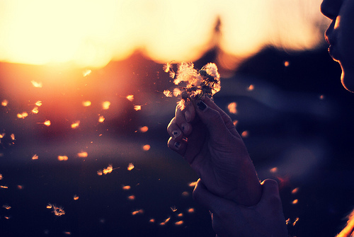 beautiful, cute, dandelion, dream, flower, girl, photo, photography, sun, sunrise, sunset, wish