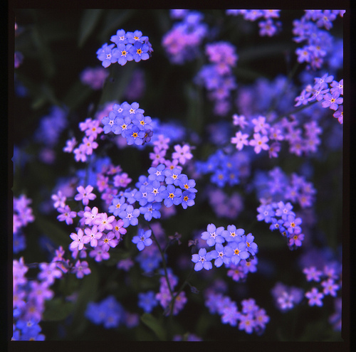 beautiful, flower, flowers, nature, purple
