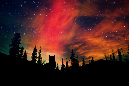 beautiful, heaven, night, northlight, red