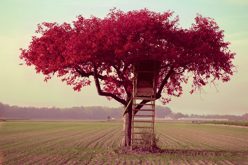 beautifull, cute, landscape, pink, romantic, tree, treehouse