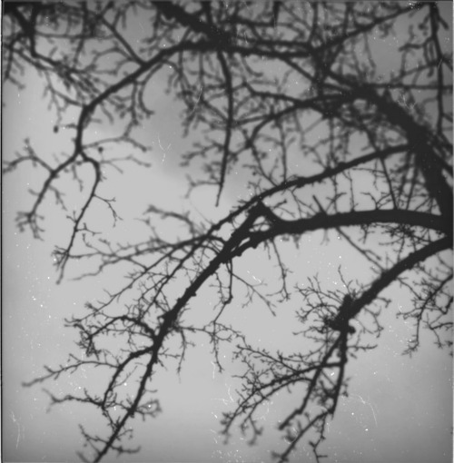 beauty, black and white, nature, photography, polaroid