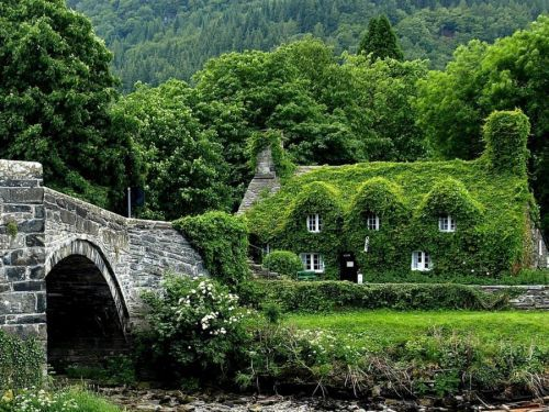 beauty, brigde, english cottage, flowers, nature, river, trees