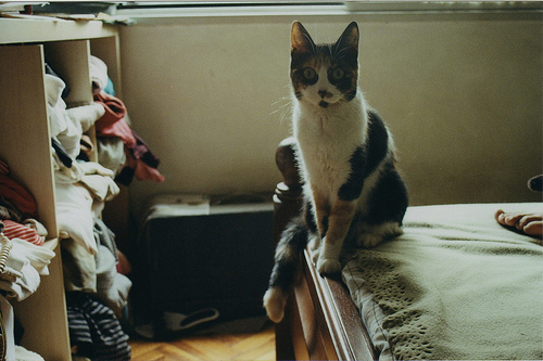 bed, cat, cute, fashion, ghironda, hipster, indie, pretty