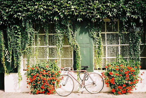 bicycle, bike, floral, flowers, green