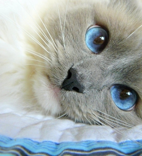 big, blue, cristal, cute, eyes