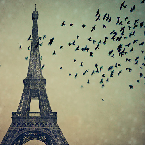 bird, eiffel, freedom, paris