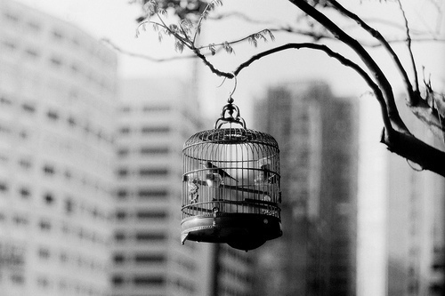 birds, black and white, cage