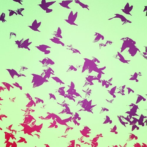 birds, colors, flying, free, instagram