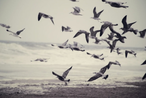 birds, life, sea